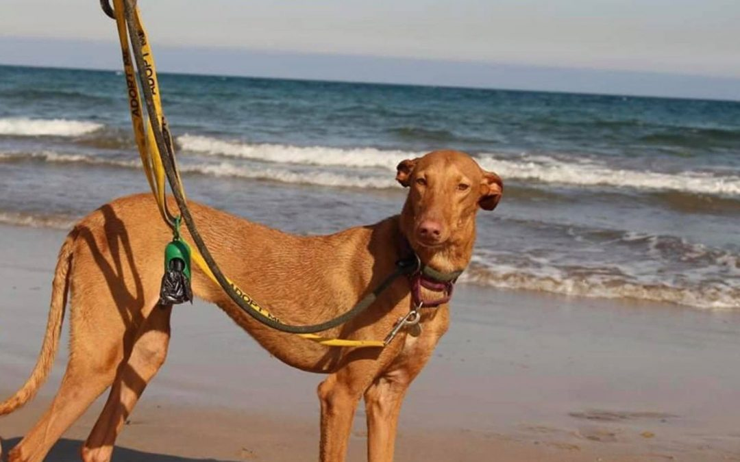 India – Adopted!