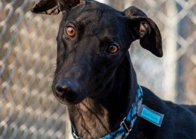 Black Dawg – Adopted!