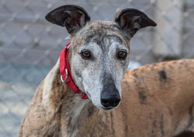 Dizzy Diva – Adopted!