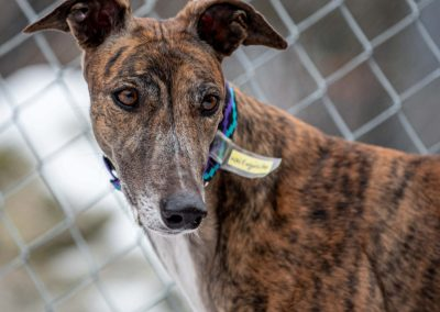 WW Exquisite – Adopted!