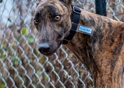 Fly Lucky Break – Adopted!