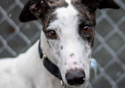 TNT Spotteddemon – Adopted!