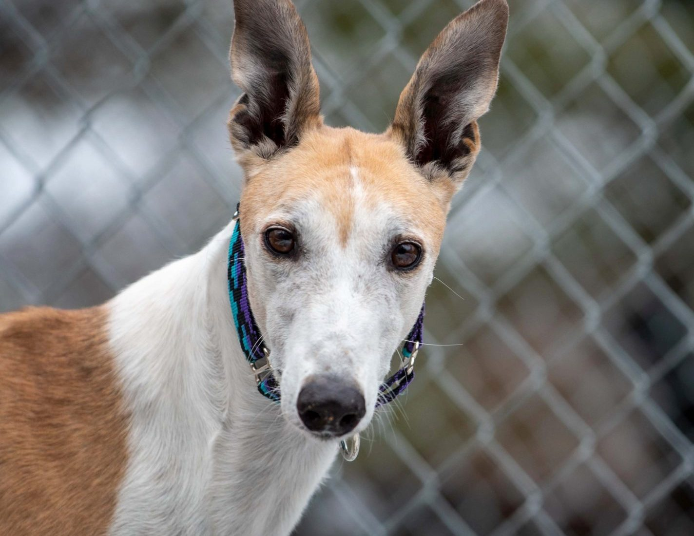 SE's Wet Ember – Adopted!