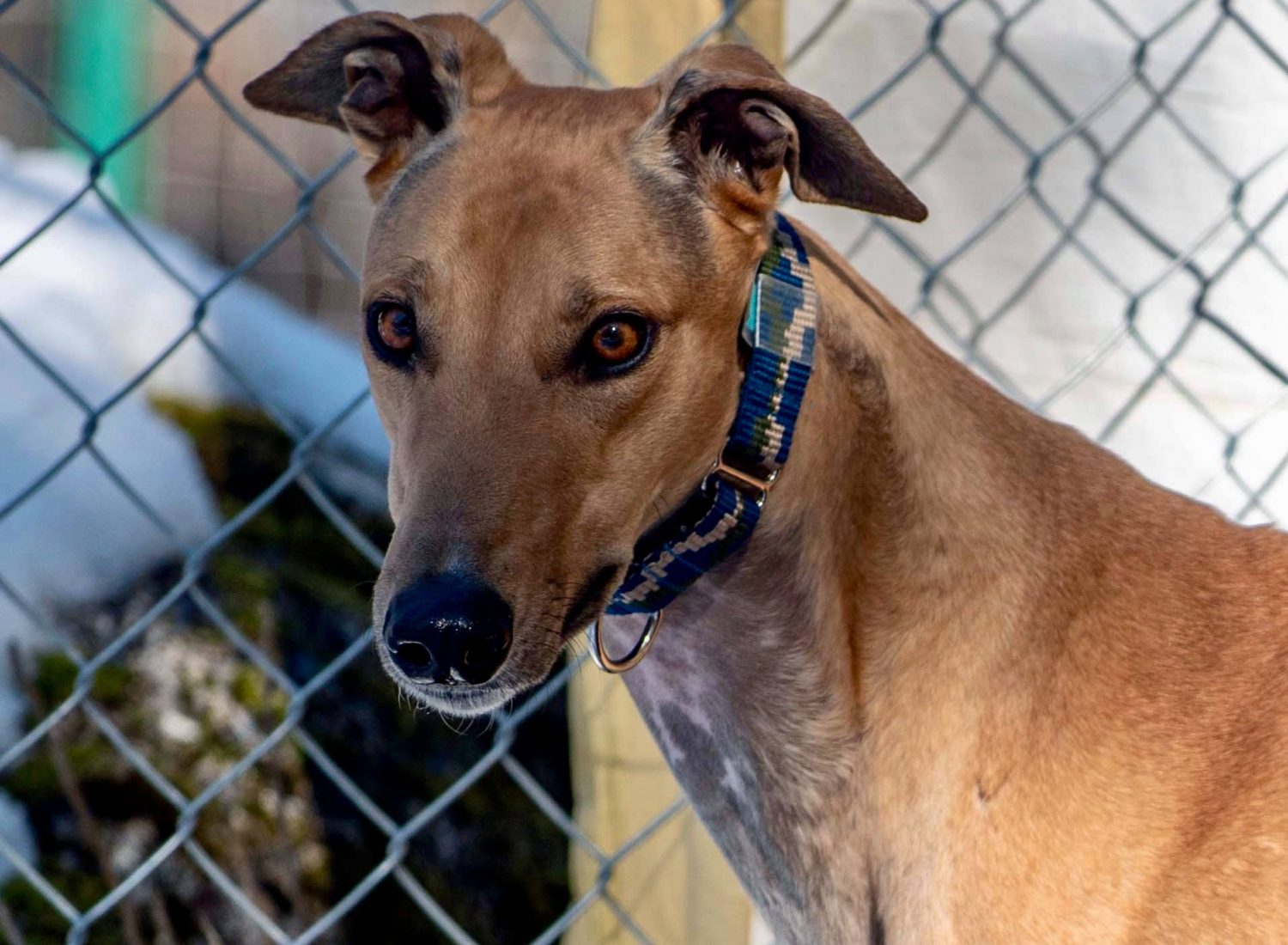 Flying Arapaho – Adopted!