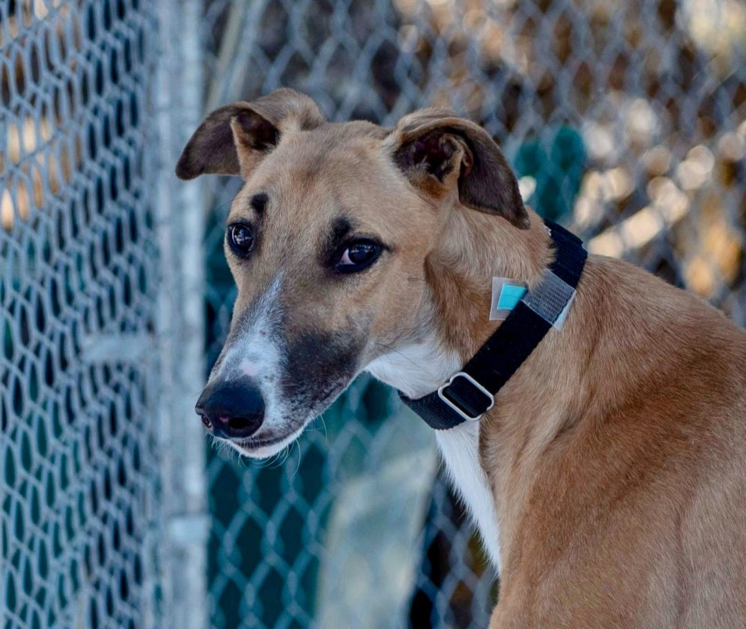 Superior Boone – Adopted!